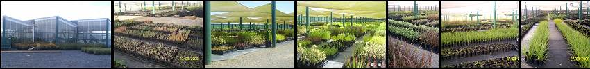 Waimarie Nurseries growing over 1 million plants per annum from seed.